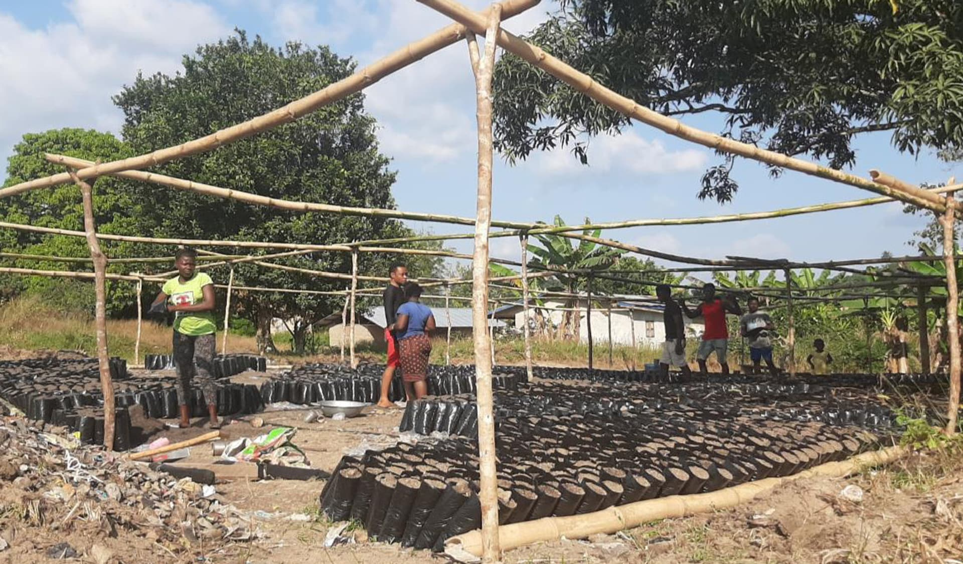 Bio-Kakaoplantage, Tradin Organic, Afrika