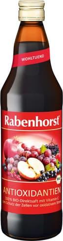 Bb rabenhorst