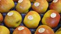 Äpfel mit Knospe-Label von Bio Suisse