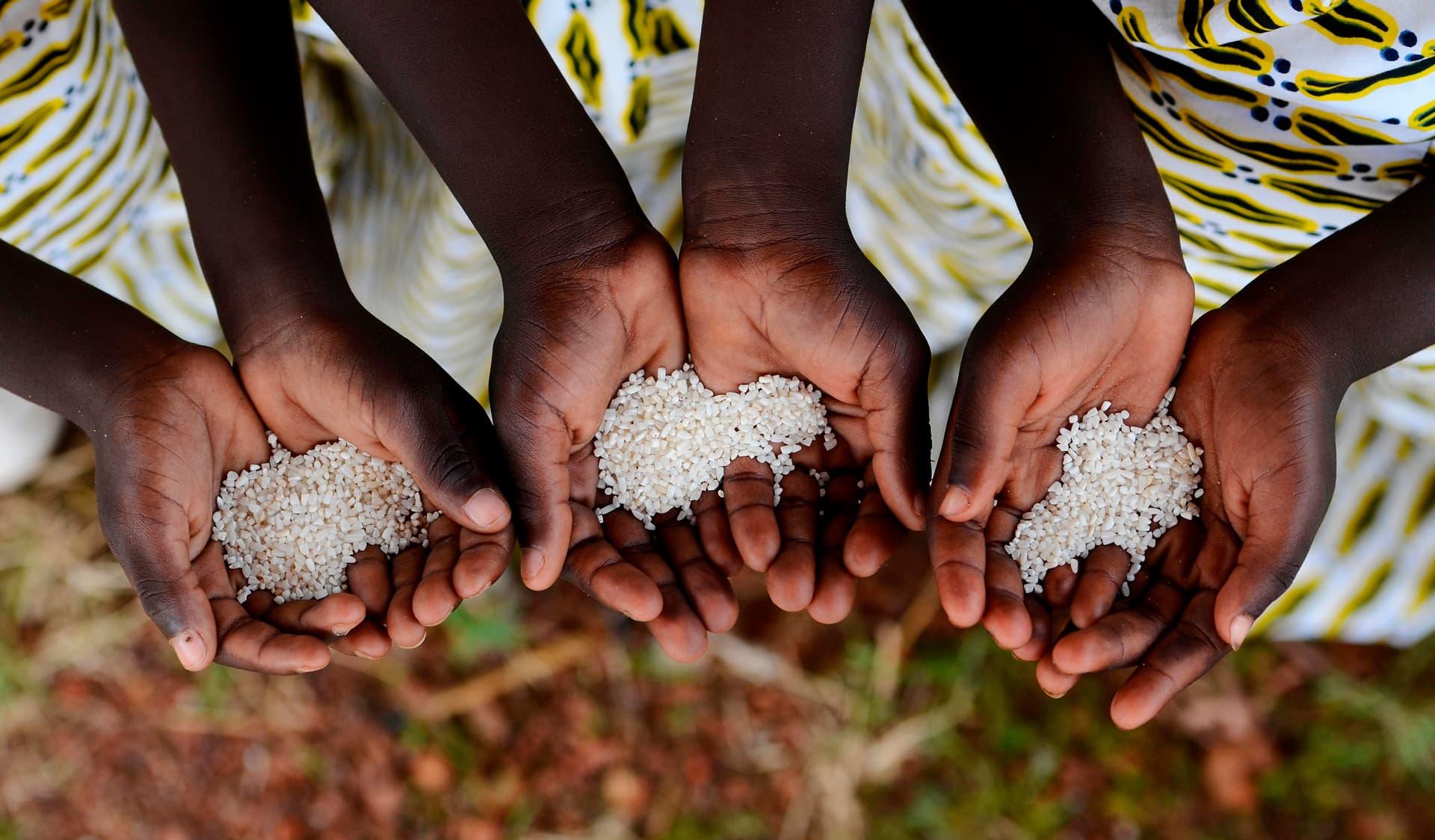 Etwas Reis liegt in Händen