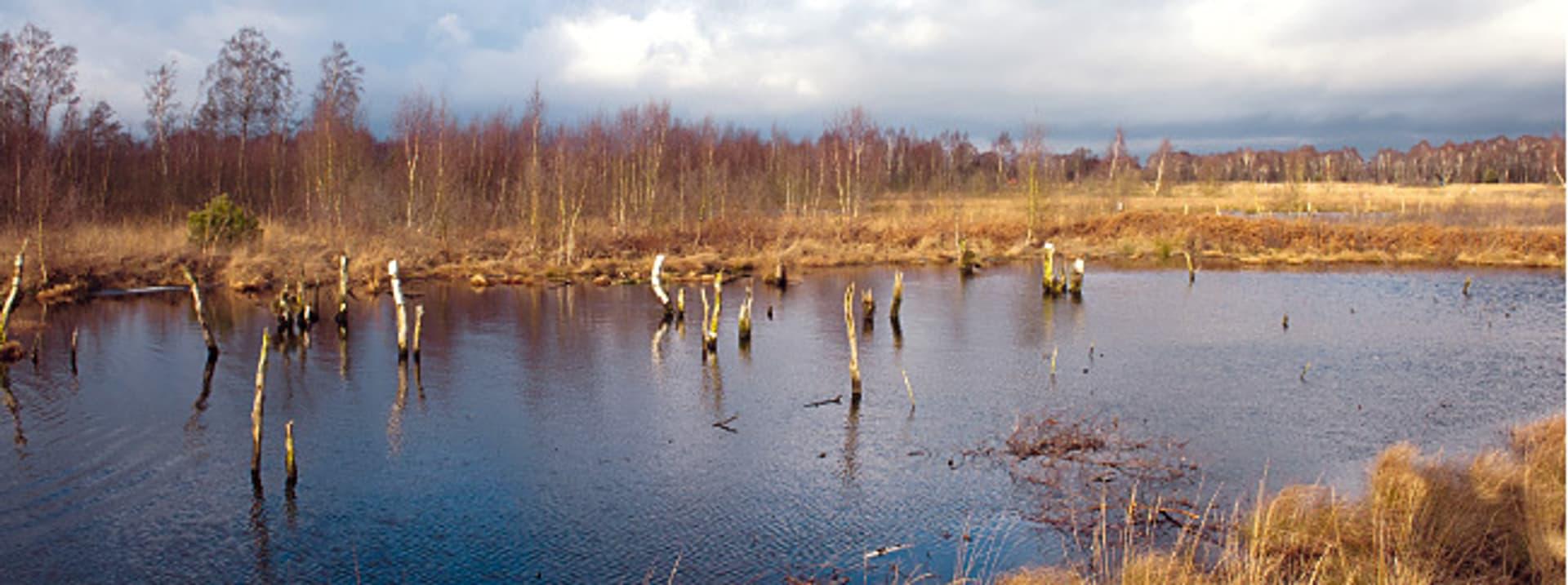 Diepholzer Moor (Fotos: Thomas Langreder)