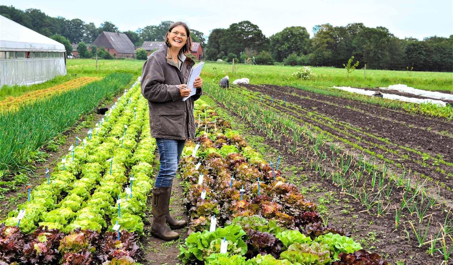 Frau steht in einem Beet mit vielen Salatköpfen