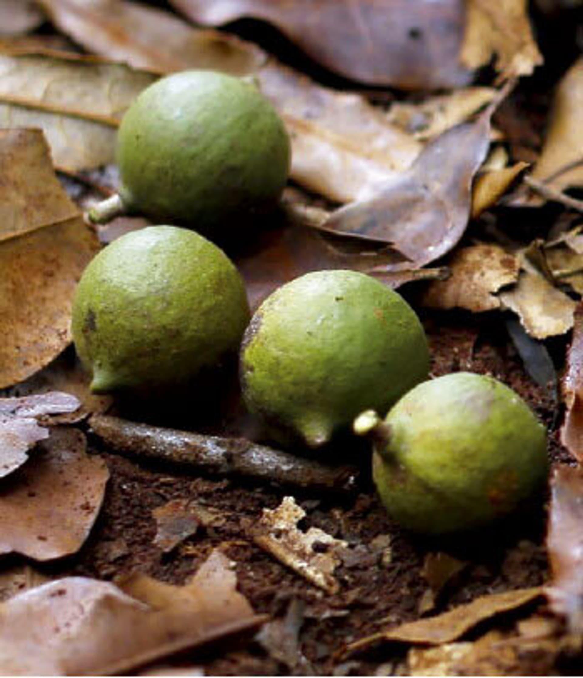 Dr hauschka macadamia nuesse