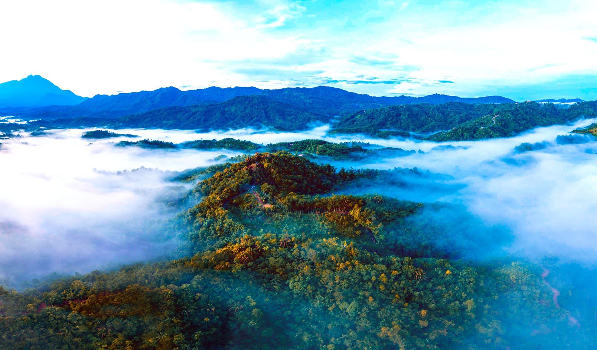 Der Regenwald von oben