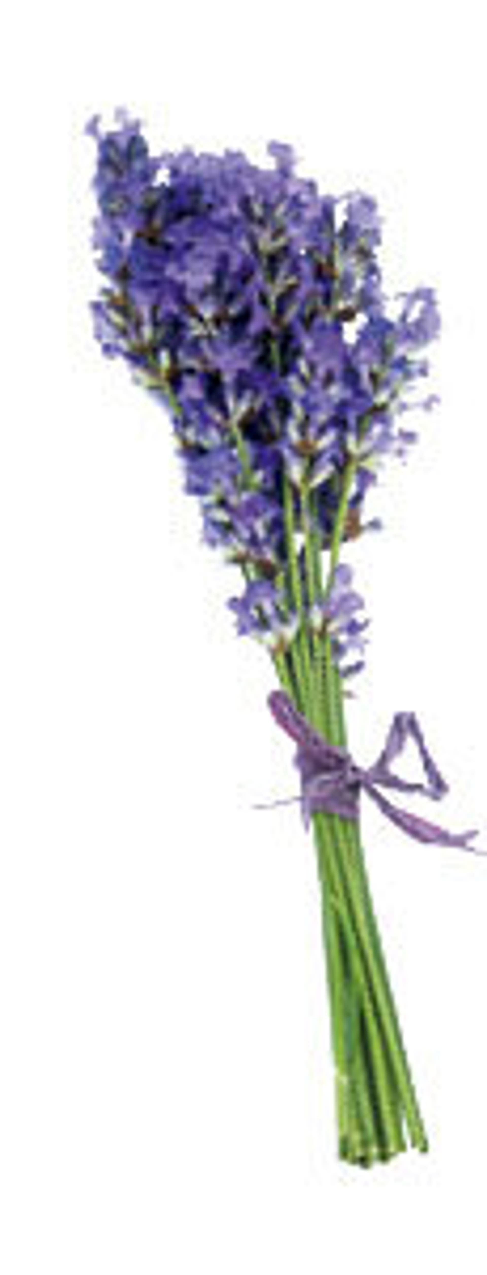 Lavendel (Foto: gettyimages/Rosemary Calvert)