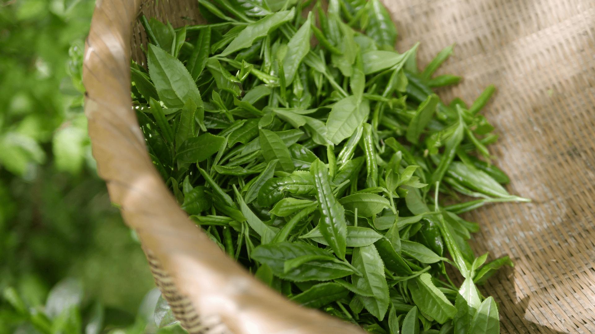 Grüner Tee in einem Korb