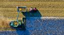 Landmaschine mäht ein Feld
