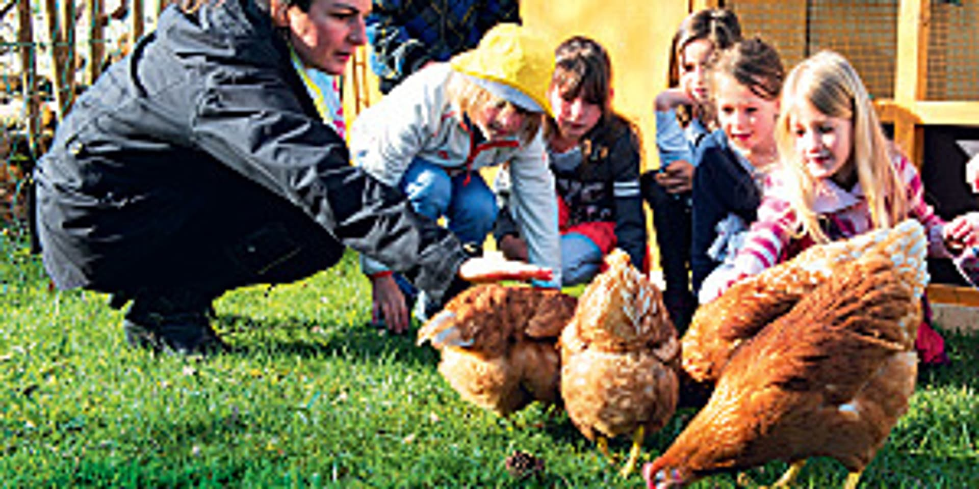 Tiere in schule 1 kl