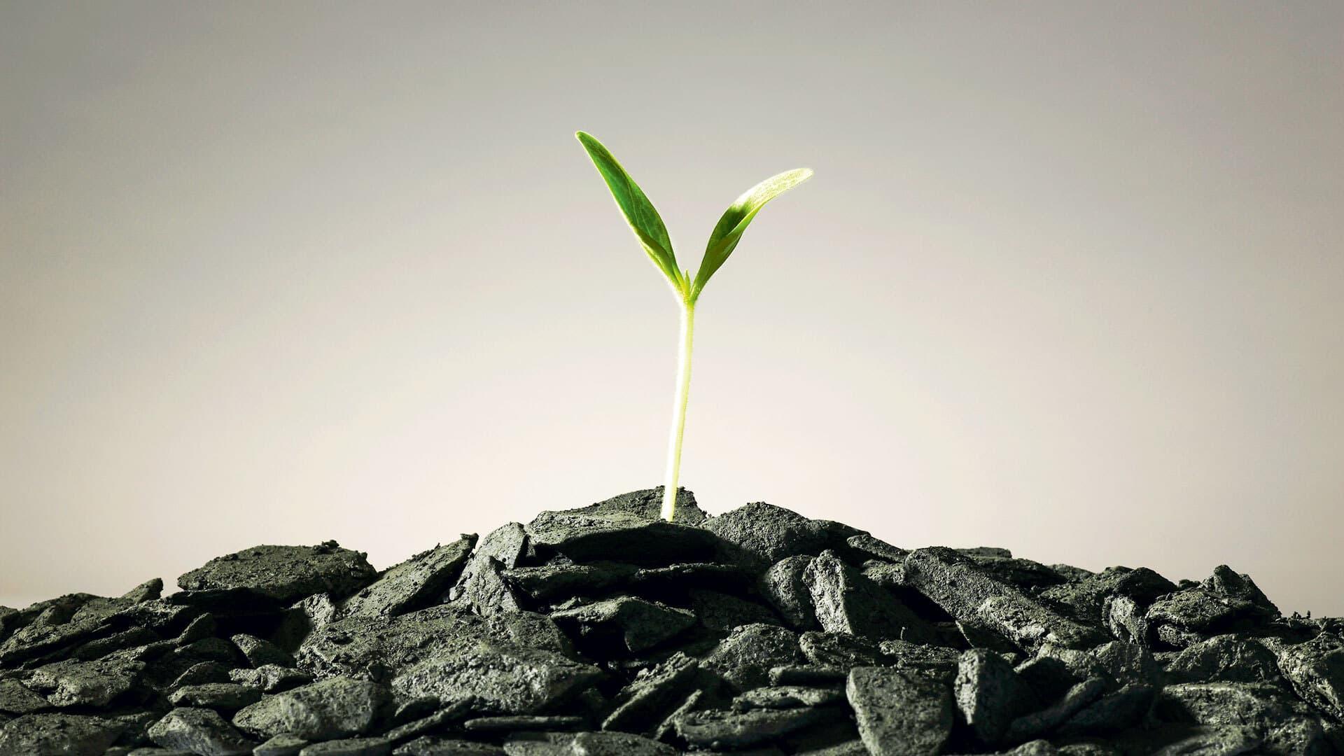 Aus einem Haufen Kohle wächst eine kleine Pflanze