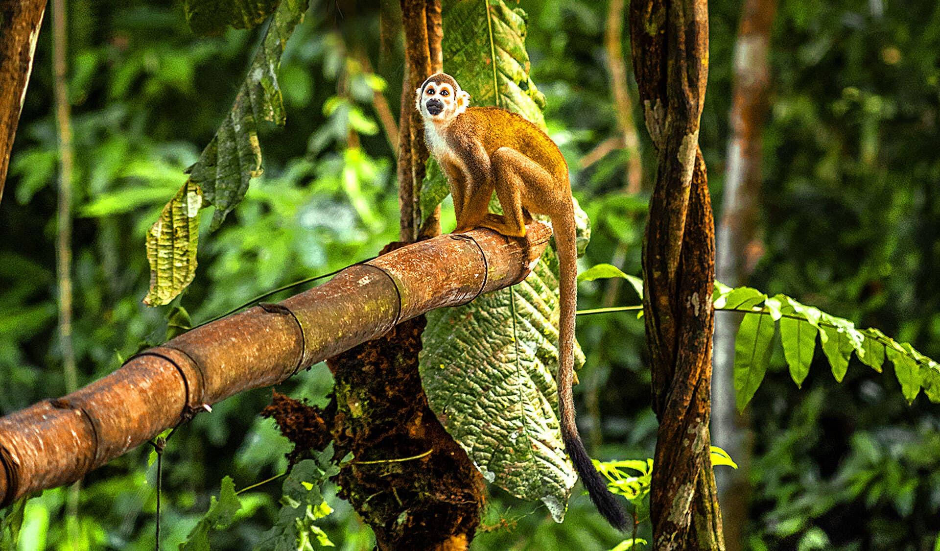 Kleiner Affe sitzt auf einer Palme im Urwald
