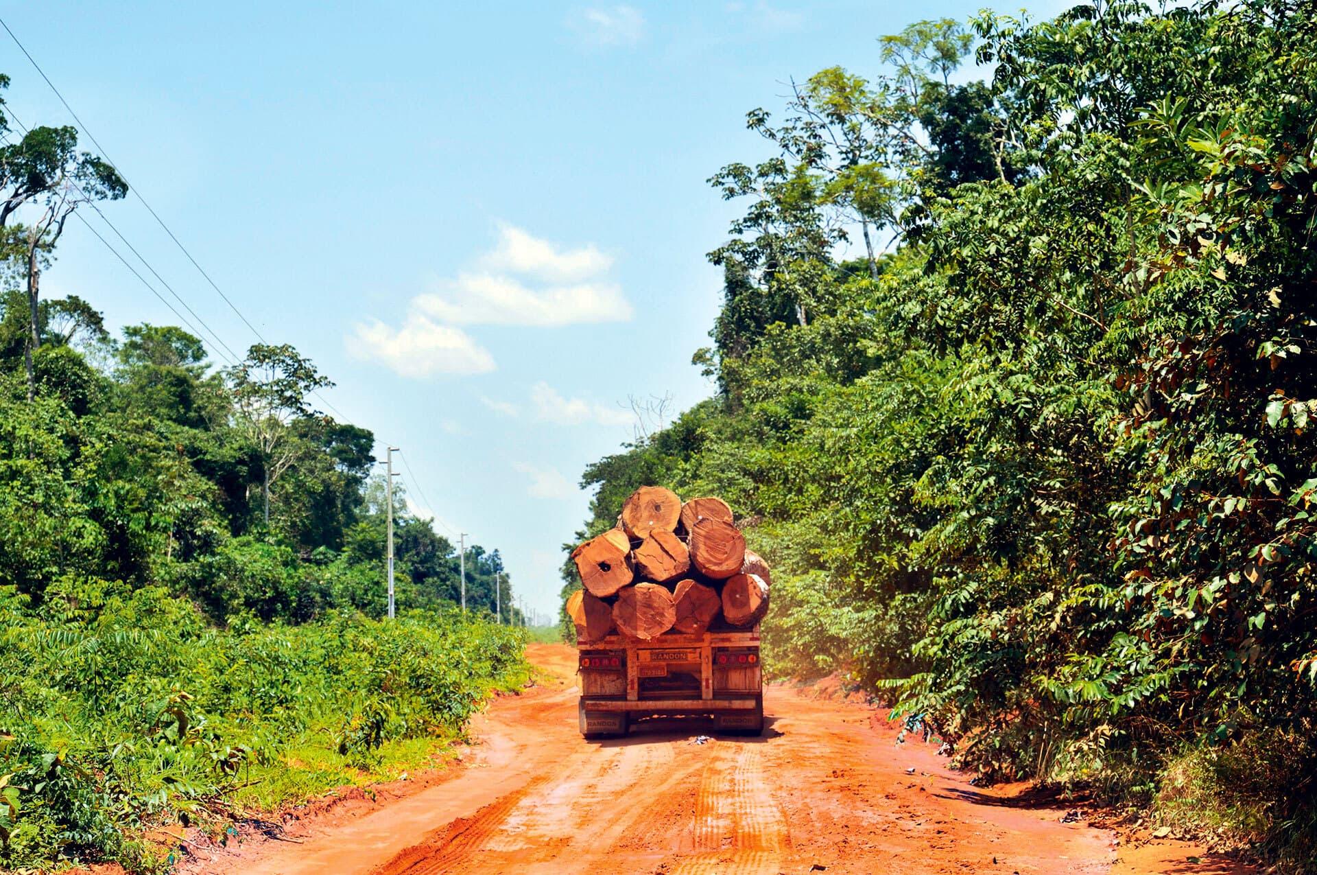 LKW fährt abgeholzte Baumstämme weg