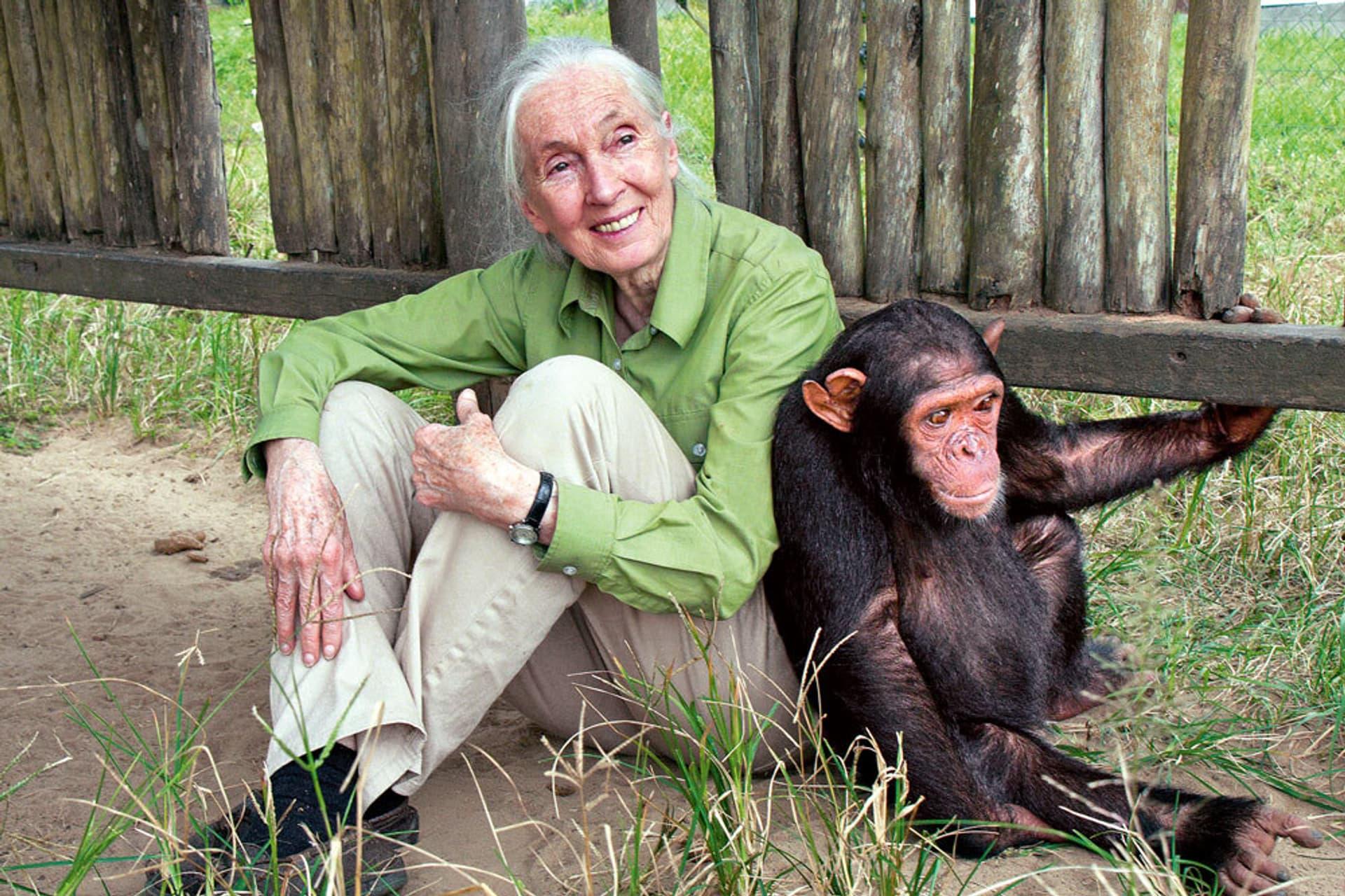 Jane Goodall sitzt neben einem Schimpansen auf dem Boden