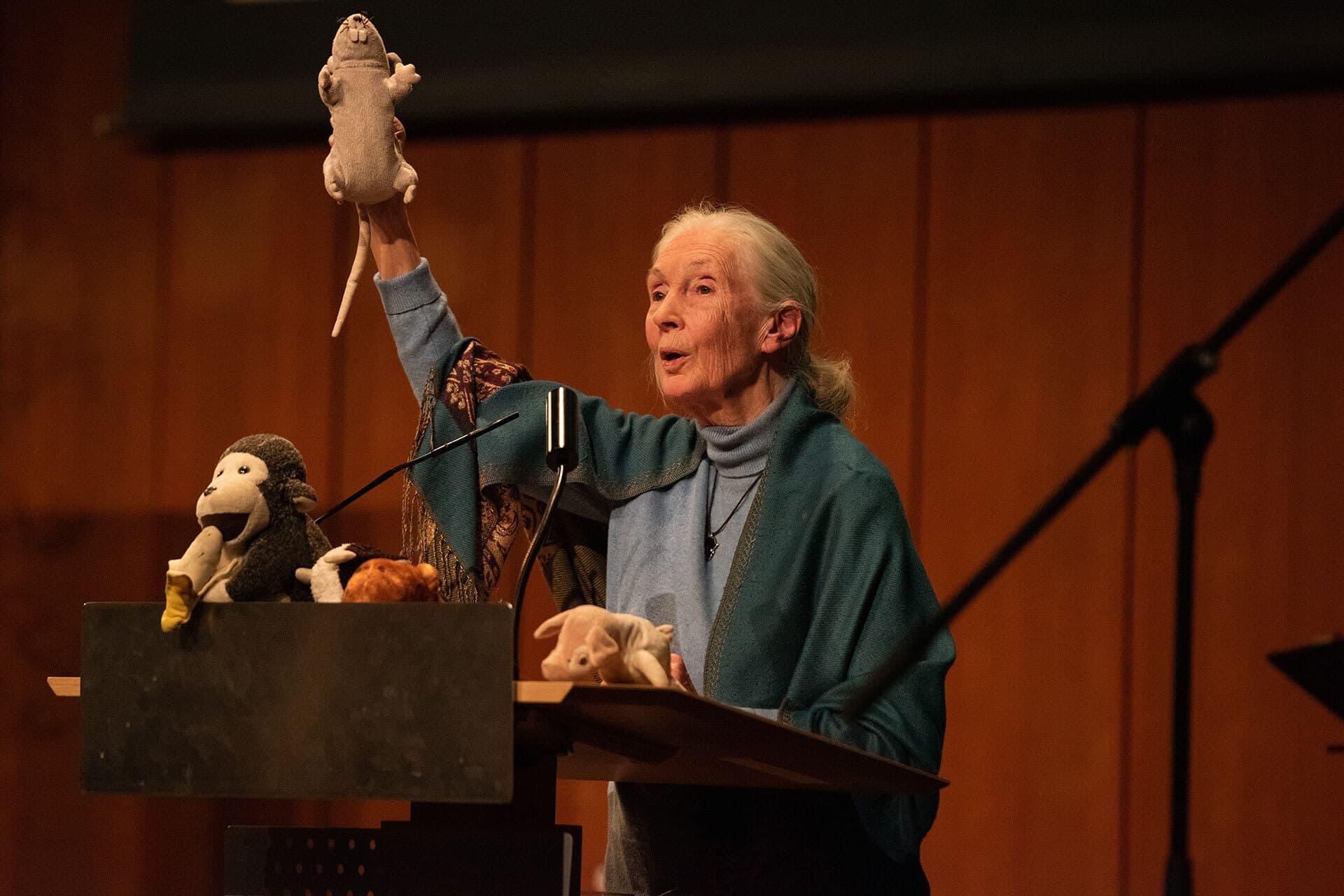 Jane Goodall hält einen mitreißenden Vortrag über ihr Leben. Mit dabei ihre Stofftiere als Symbole für Versuchstiere und Tierhaltung.
