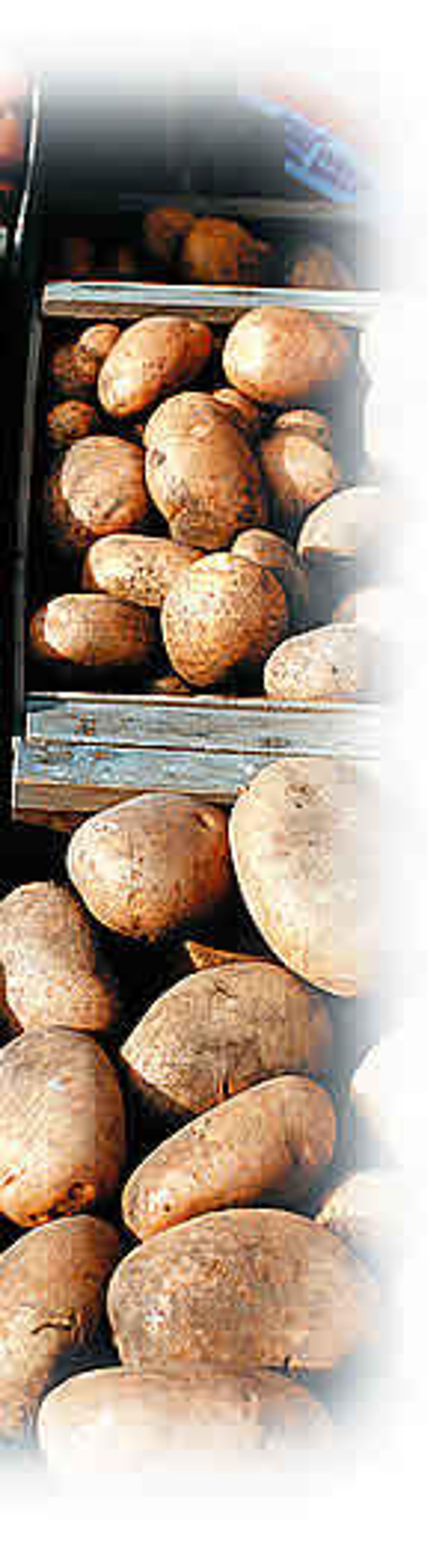 Rezept kartoffel1