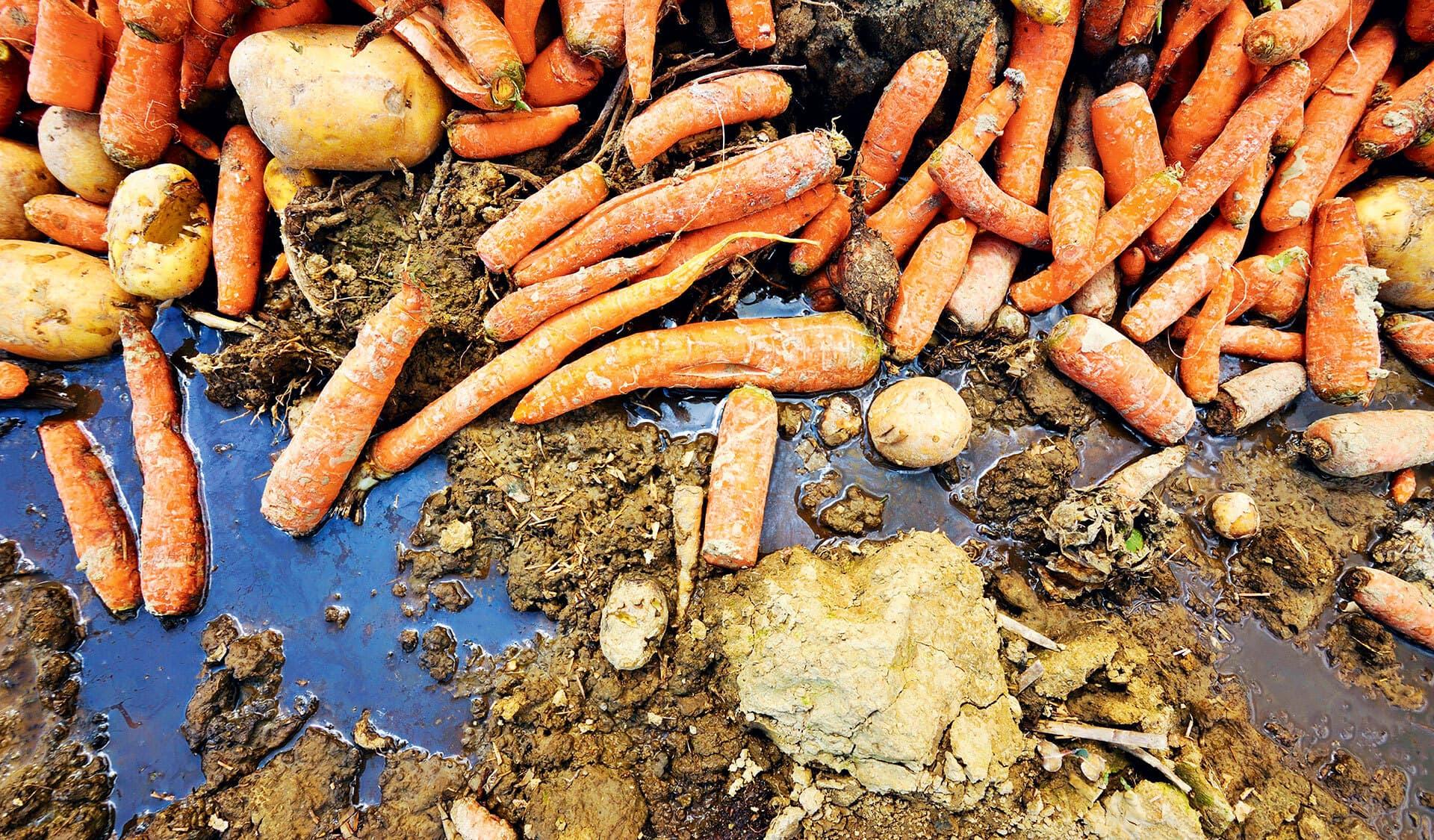 Karotten und Kartoffeln auf einem Acker