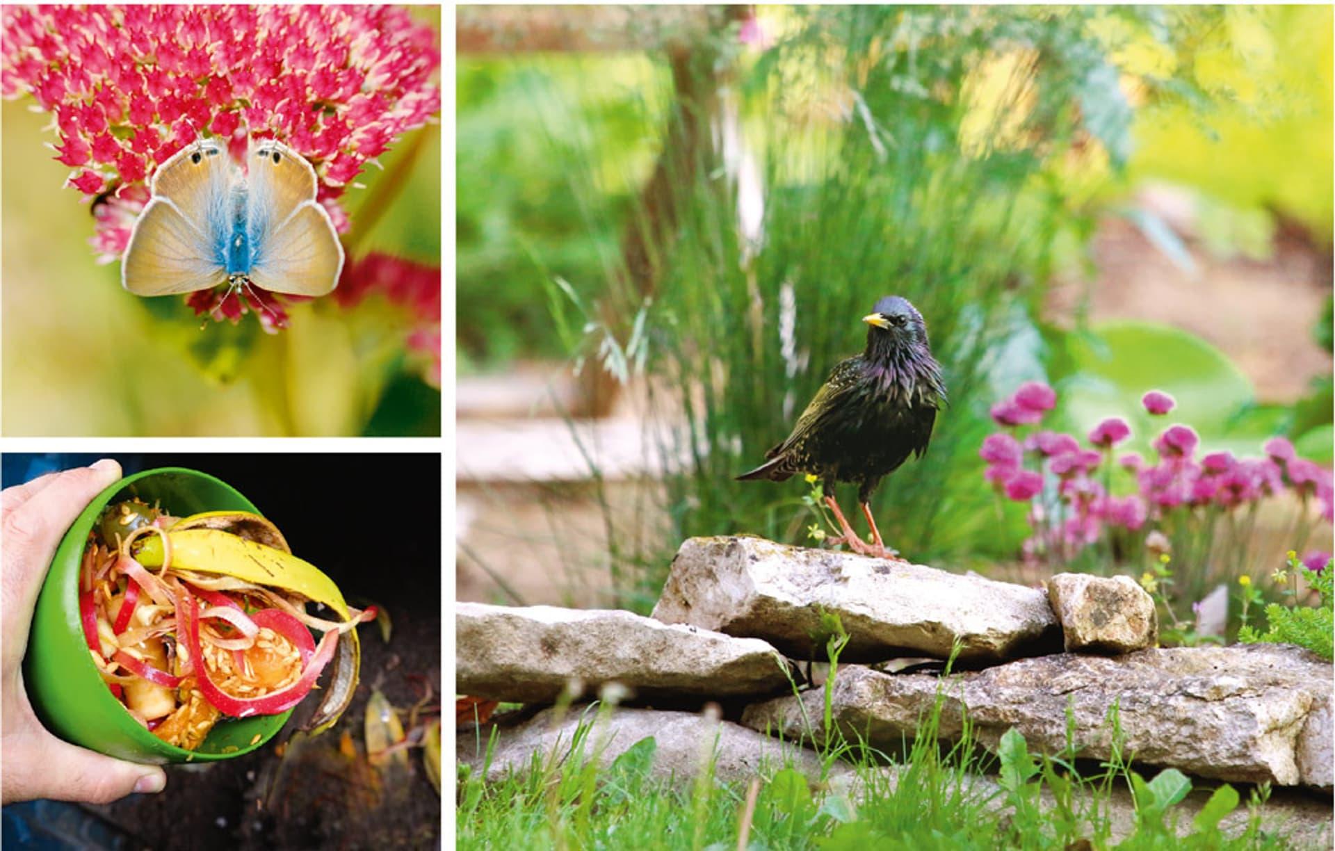 Drei Fotos aus dem Naturgarten zeigen einen Schmetterling einen Vogel und Kompostabfall
