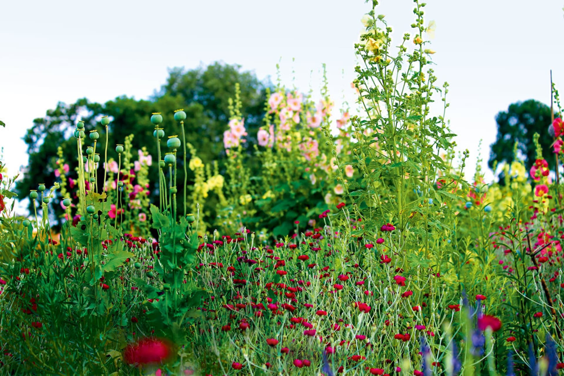Blumen im Naturgarten
