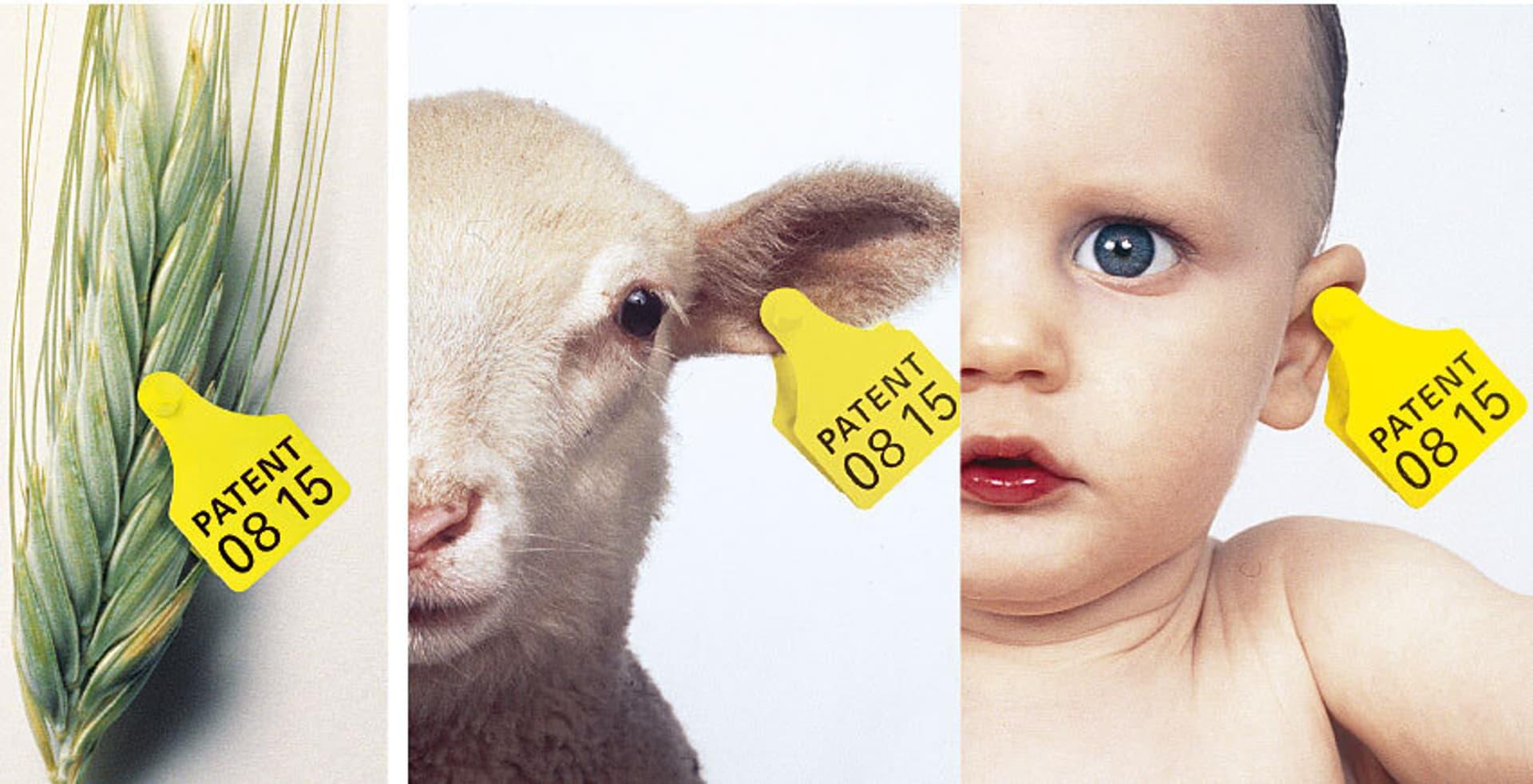Getreide, Schaf und Mensch mit Ohrmarke auf der Patent 0815 steht