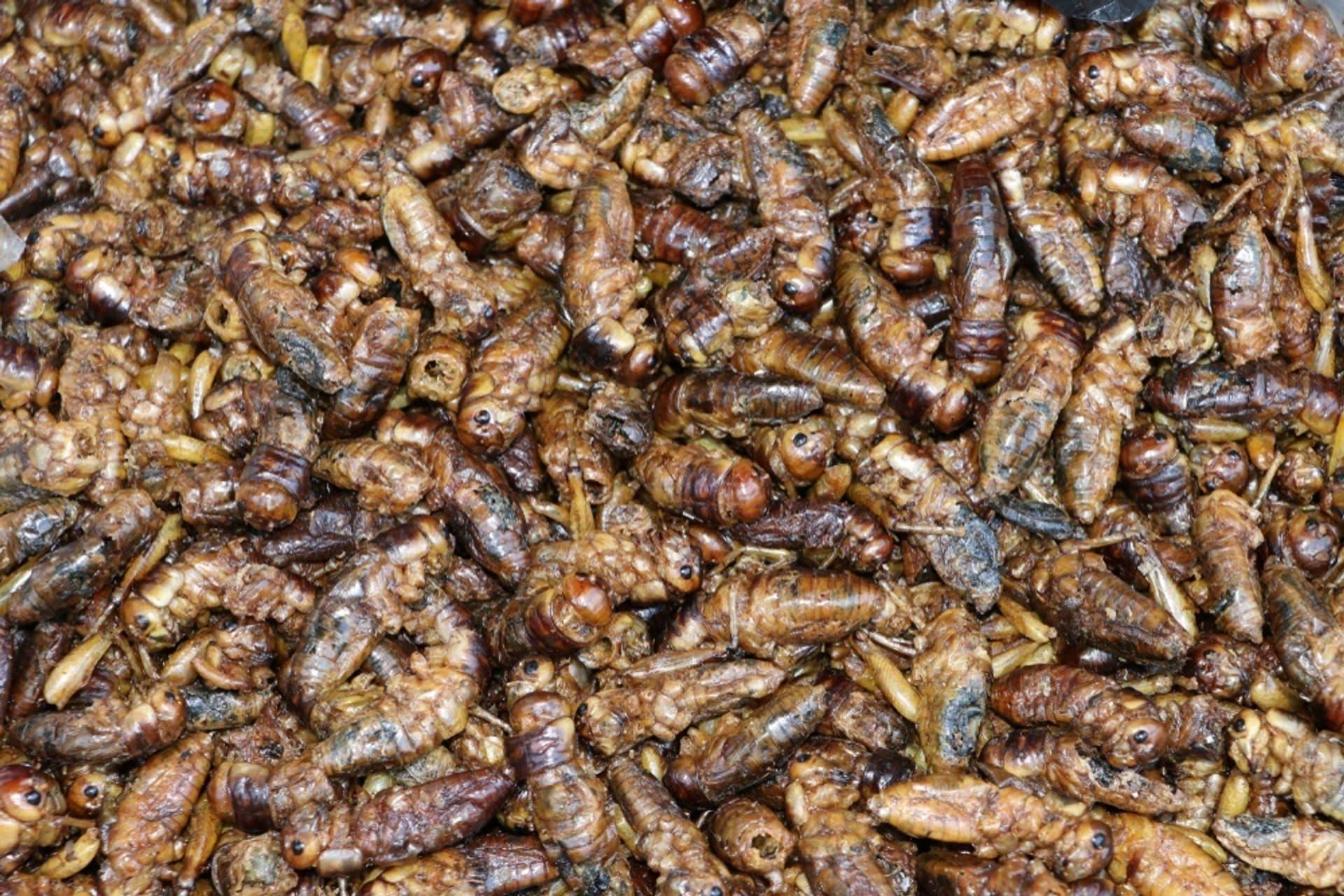 Insektenzucht Symbolbild c au uhoo