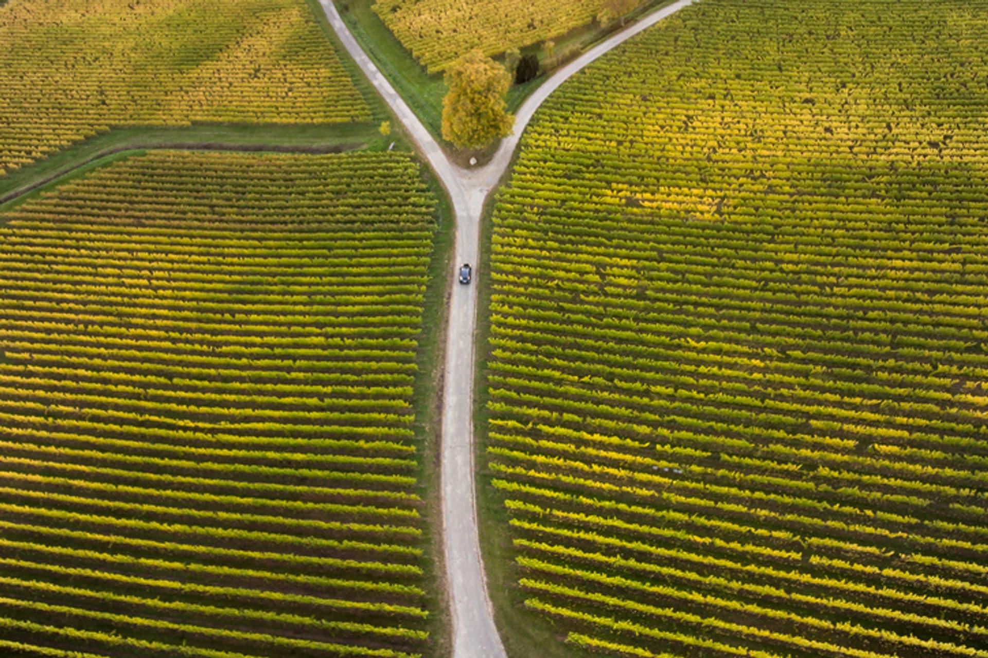 Landwirtschaft Scheideweg c ollo i Stock 619399816