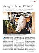 Begegnen - Kühe