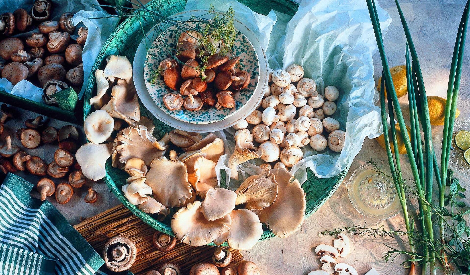 Zuchtpilze: Champignons, Seitlinge, Austerpilze auf deinem Tisch