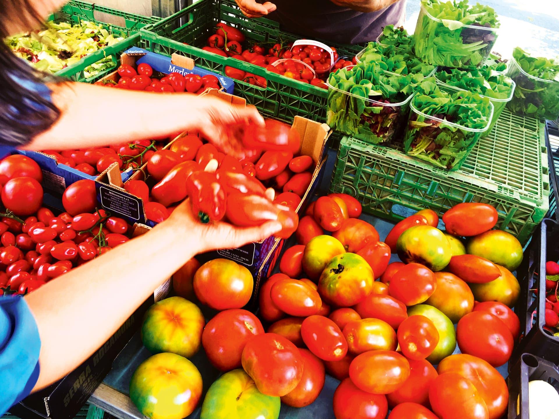 Plastikkörbe und Kartons voller verschiedener Tomaten. Zwei Hände sortieren weitere Tomaten in die Kartons ein.