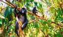 Affen sitzen in Bäumen