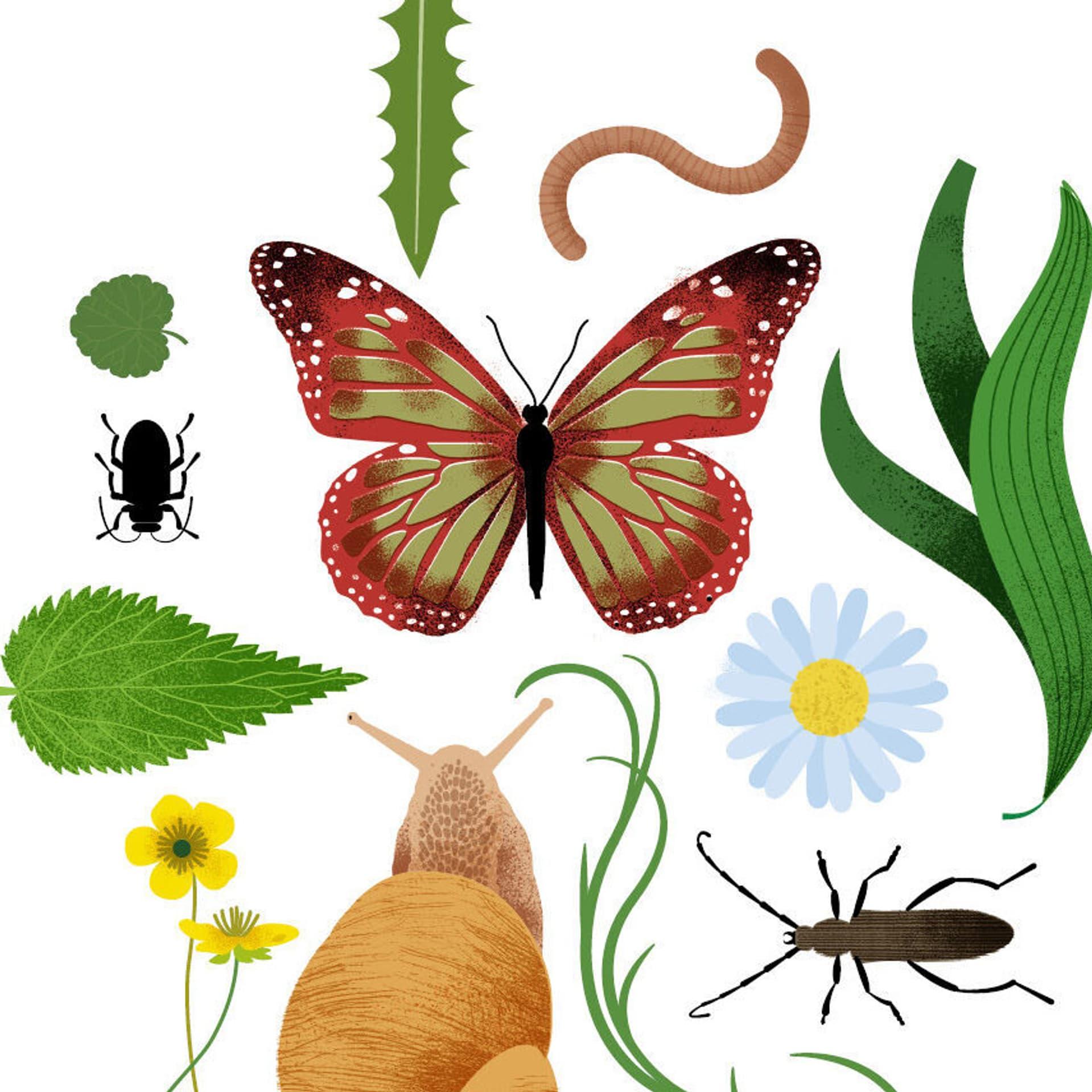 Illustration mit allerlei Tieren und Pflanzen.