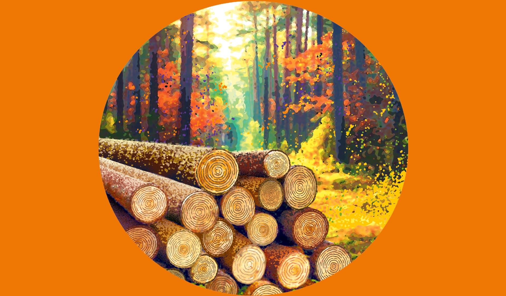 Holzstämme liegen im Herbstwald