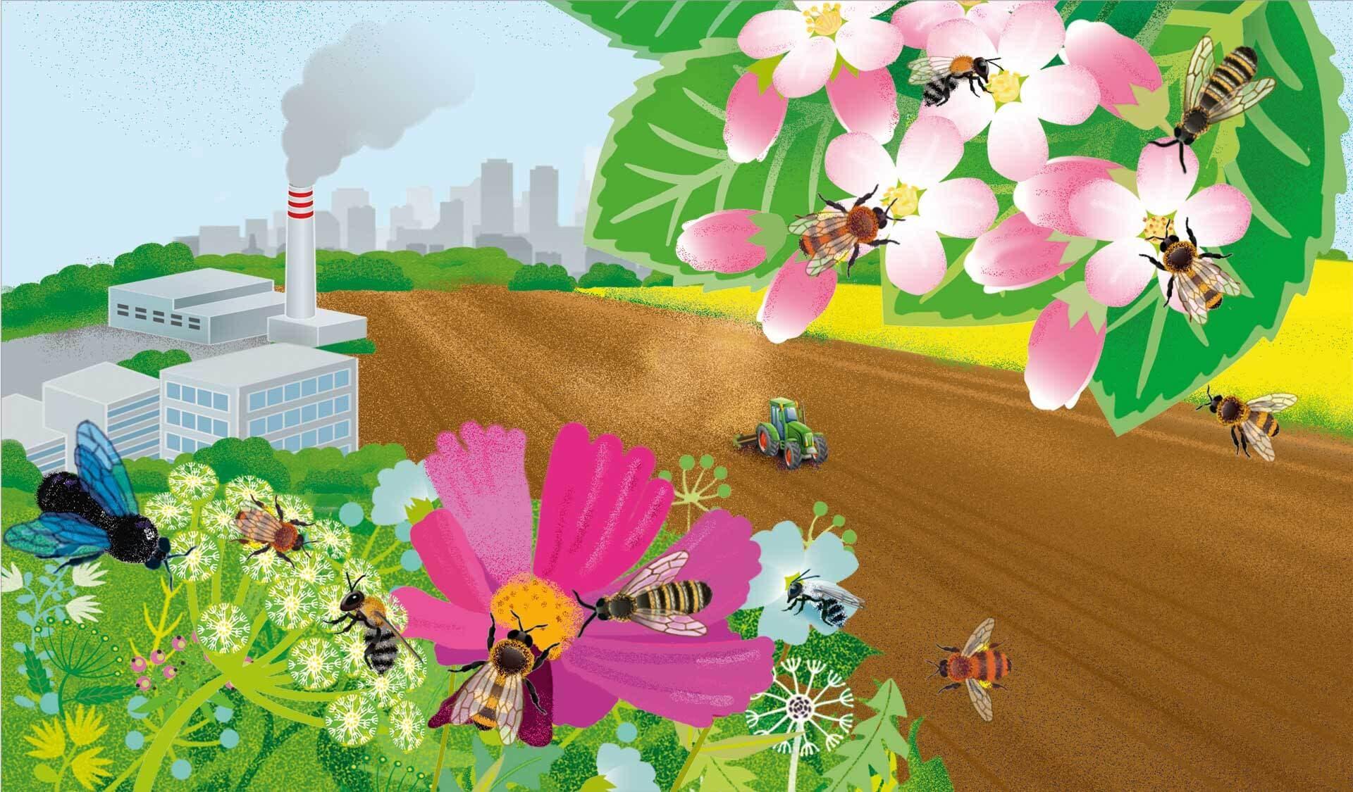 Illustration unterschiedlicher Wildbienen