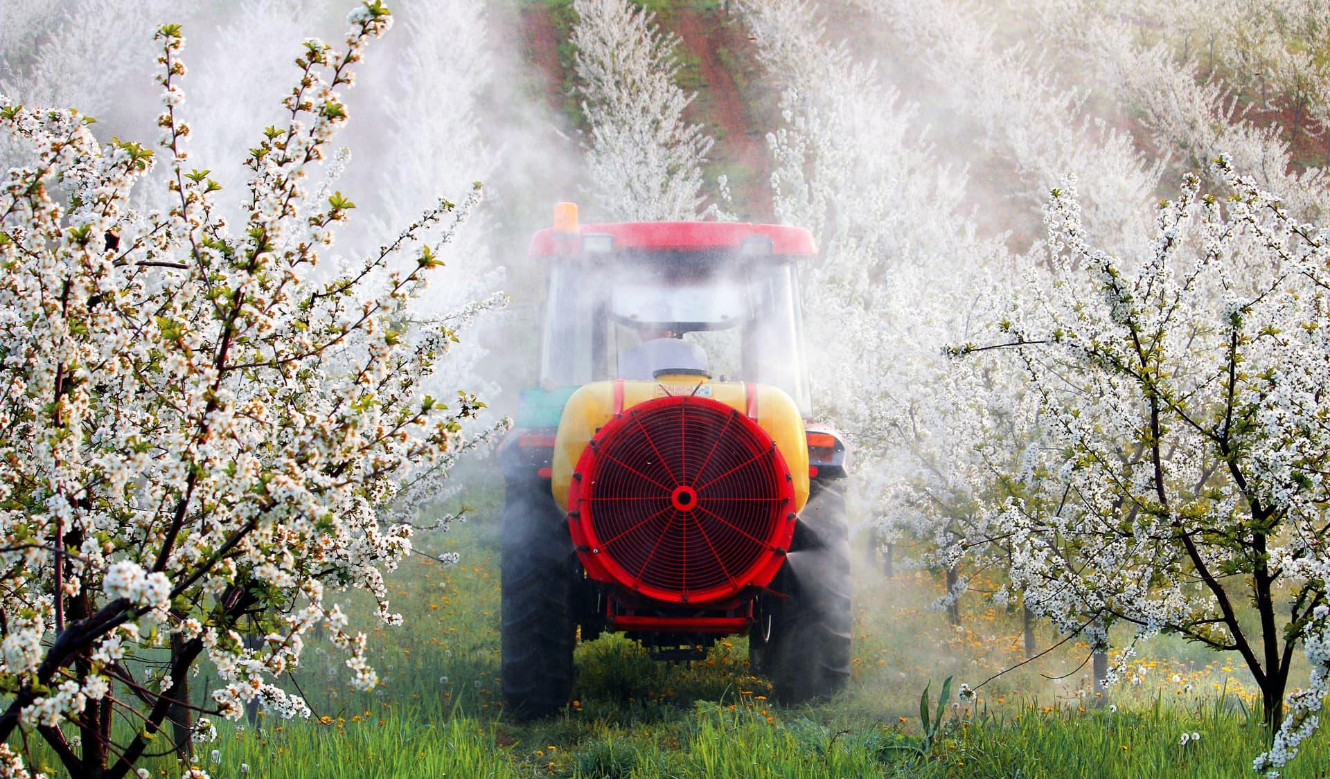Pestizidsprühender Traktor in einer Obstplantage