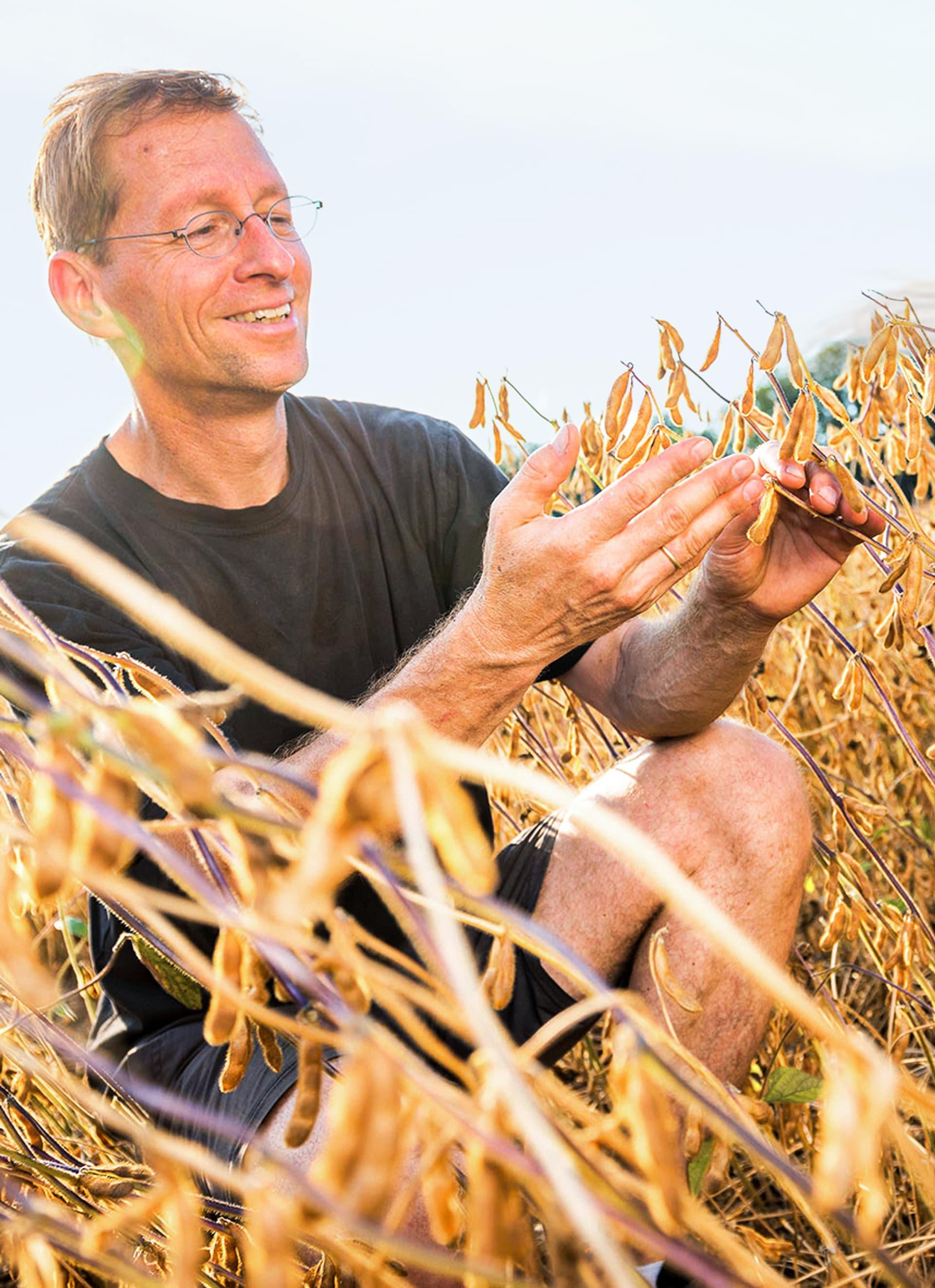 Mann sitzt in einem Feld Sojabohnen