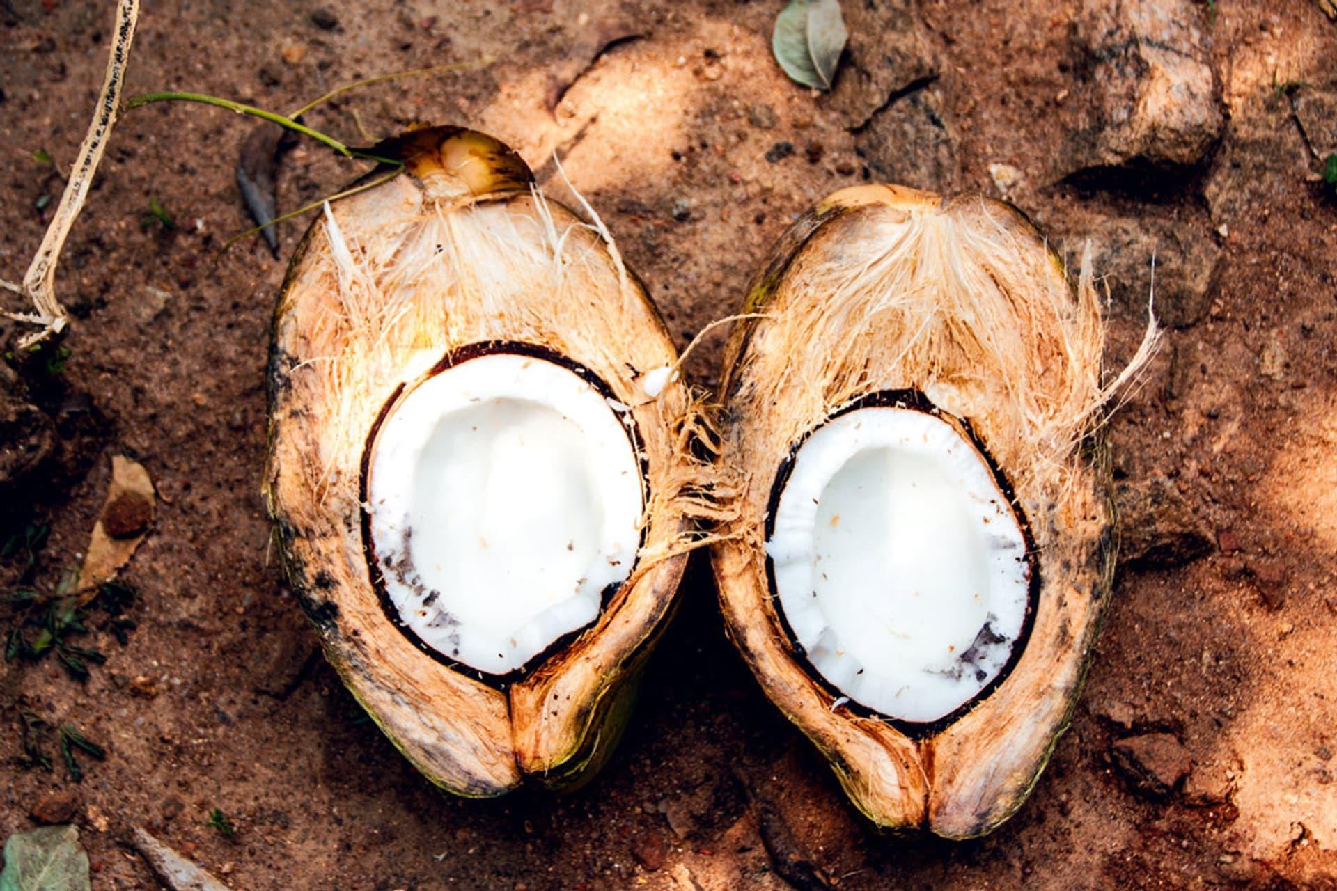 Geöffnete Kokosnuss liegt in zwei Hälften auf braunem Sandboden, das weiße Fruchtfleisch ist zu sehen.