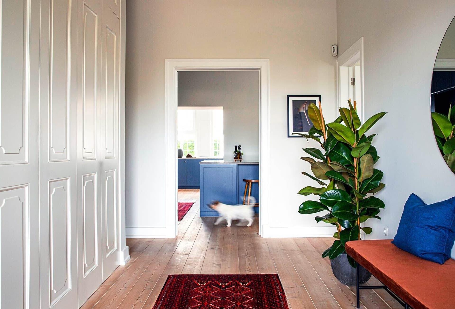 Blick in eine Wohnung; Hund läuft durchs Bild