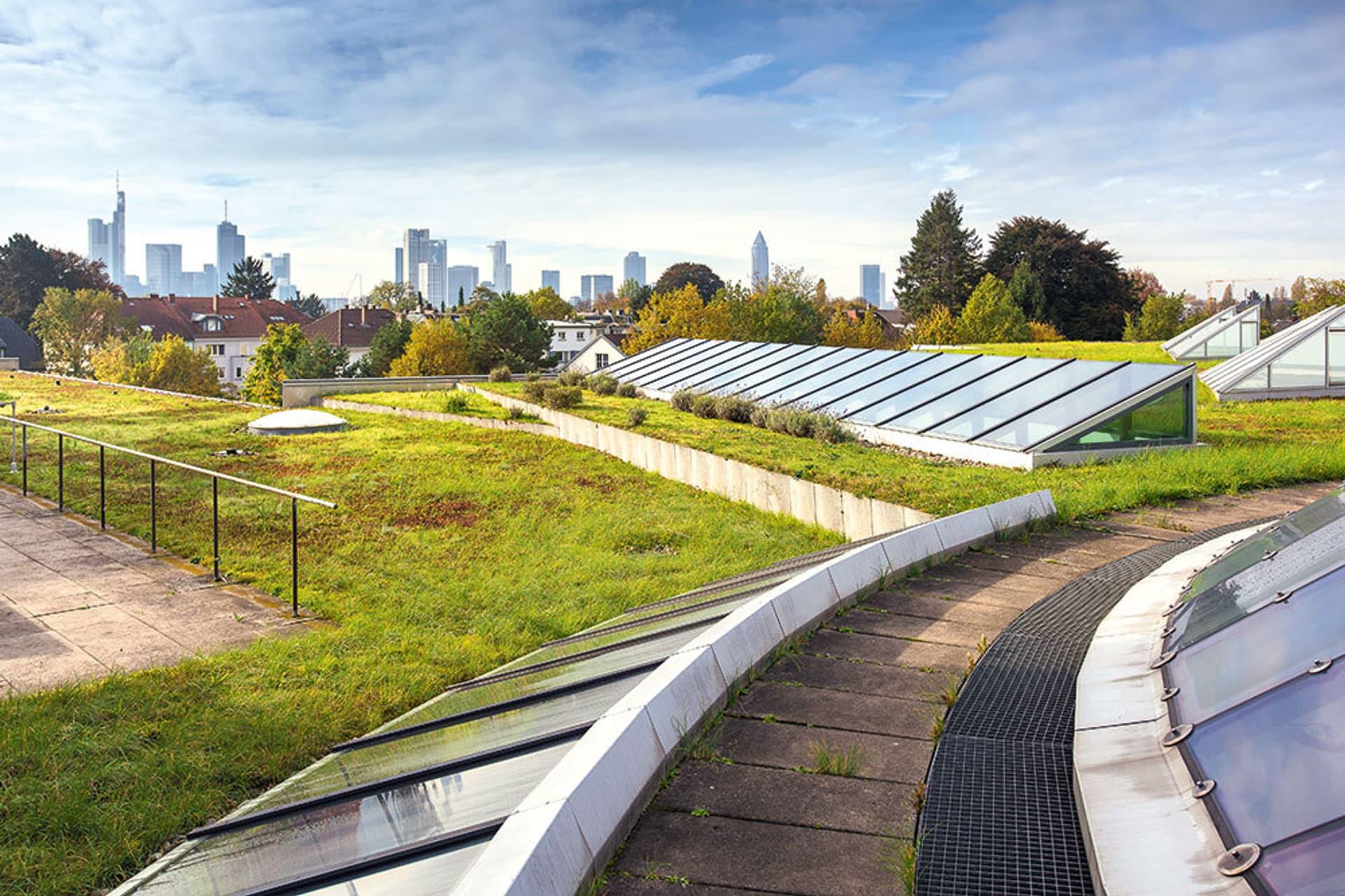 Das Dach der Deutschen Bibliothek in Frankfurt ist begrünt, teils begehbar und hat Dachfenster. Im Hintergrund ragen die Hochhäuser der in den Himmel