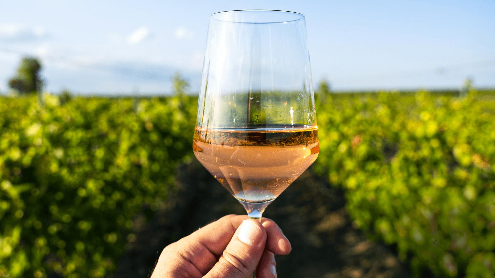 Eine Hand hält ein Weinglas vor Weinreben bei sonnigem Wetter