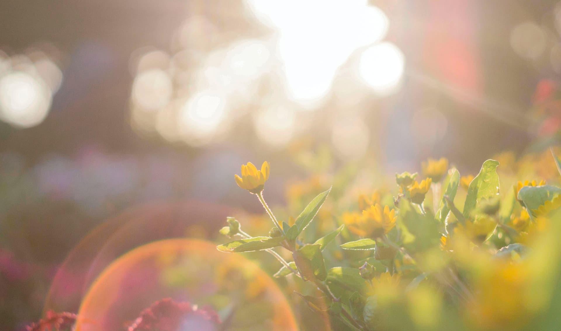 Gelbe Blumen im Sonnenlicht
