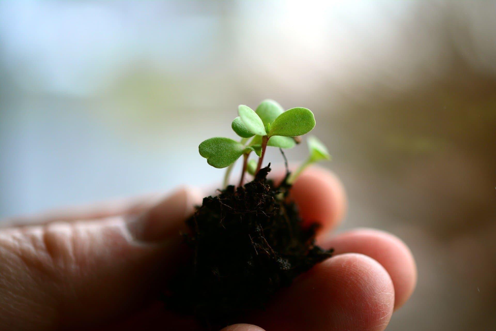 Pflanze und Erde in Hand