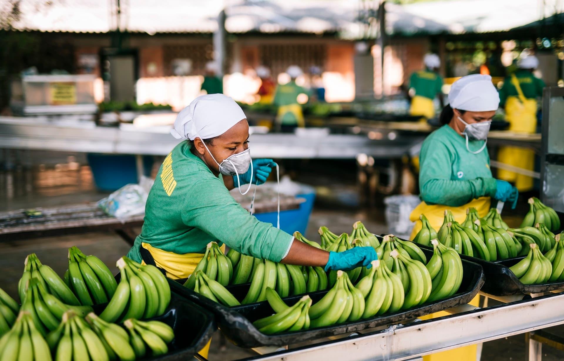 Mitarbeiterinnen von Fairtrade-Bananenplantage