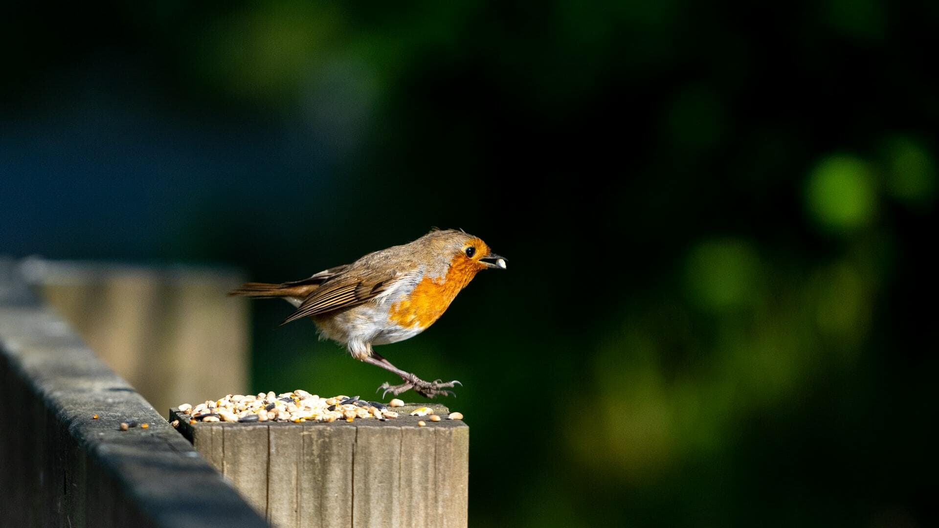 How to to attract birds to your garden