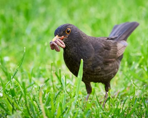 Are Birds Omnivores? (Which Birds, What Do They Eat?)