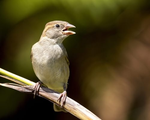 Keep Seeing Birds With Their Beaks Open? Everything Explained