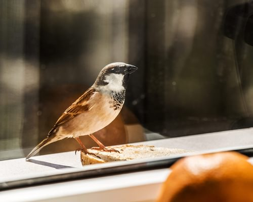 Can Birds See Glass? (All You Need To Know)