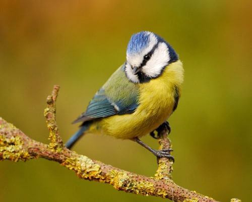 Can Birds Smell? (Everything Explained)