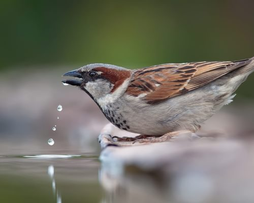 Do Birds Pee? (All You Need To Know)