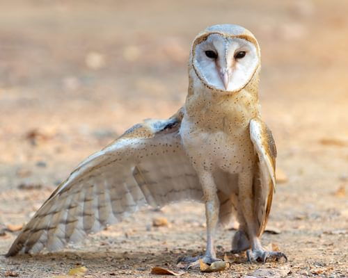 Owl Legs: Everything You Need To Know (With Pictures)