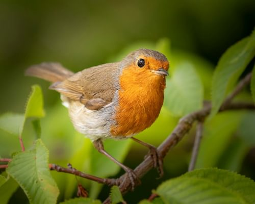 What Does a Robins Nest Look Like?