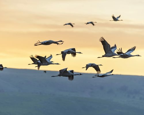 Why do birds migrate? (All you need to know)