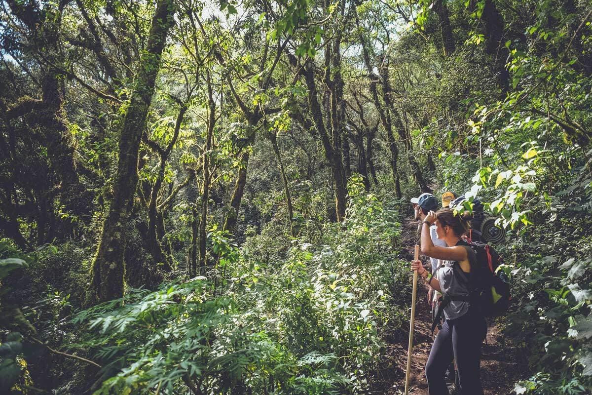 Acatenango Cloud Forest